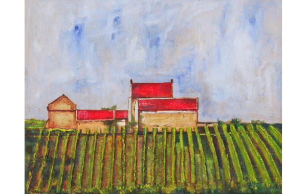 Wijnstokken in Zuid-Limburg